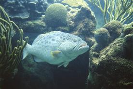 Auch die Unterwasserwelt machte Er herrlich!