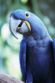 Der Papagei kann zwar sprechen, doch nicht wie wir!